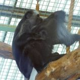 marwell-zoological-park---monkeys-003_3074854051_o