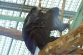 marwell-zoological-park---monkeys-003_3074854051_o