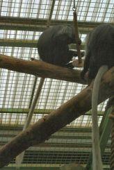 marwell-zoological-park---monkeys-004_3074854253_o
