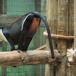 marwell-zoological-park---monkeys-005_3074854481_o
