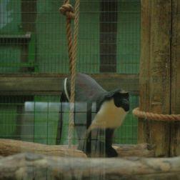 marwell-zoological-park---monkeys-007_3074854953_o