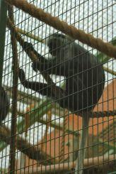 marwell-zoological-park---monkeys-008_3074855151_o