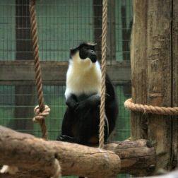 marwell-zoological-park---monkeys-009_3074855259_o