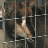 marwell-zoological-park---monkeys-010_3075690146_o