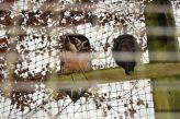marwell-zoological-park---owls-001_3075692334_o