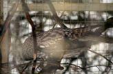 marwell-zoological-park---owls-002_3075692628_o