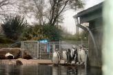 marwell-zoological-park---penguins-002_3074776290_o