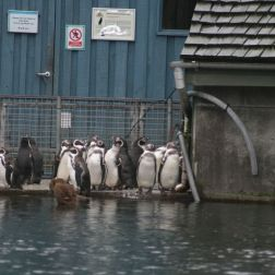 marwell-zoological-park---penguins-008_3075694484_o