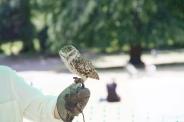 YORK, BIRDS OF PREY DISPLAY, BURROWING OWL 002