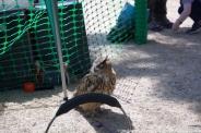 YORK, BIRDS OF PREY DISPLAY, OWL 004