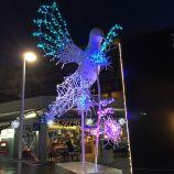 CHRISTMAS LIGHTS, BRUNSWICK SQUARE 011