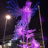 CHRISTMAS LIGHTS, BRUNSWICK SQUARE 012