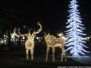 HELSINKI CHRISTMAS LIGHTS 002