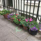 LONDON WALK, EUSTON TO BOROUGH MARKET VIA WOOD STREET 018
