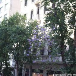 BARCELONA BUS TOUR (BLUE ROUTE) 019