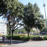 LA RAMBLA, BARCELONA 003