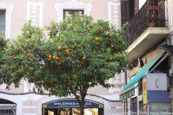 LA RAMBLA, BARCELONA 061